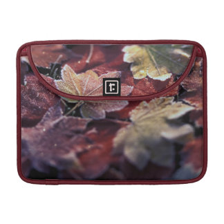 USA, Pacific Northwest. Japanese maple leaves Sleeve For MacBook Pro