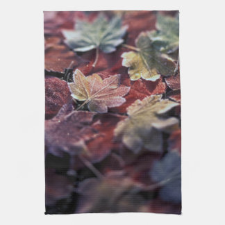 USA, Pacific Northwest. Japanese maple leaves Tea Towel