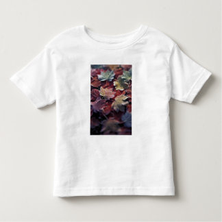 USA, Pacific Northwest. Japanese maple leaves Toddler T-Shirt