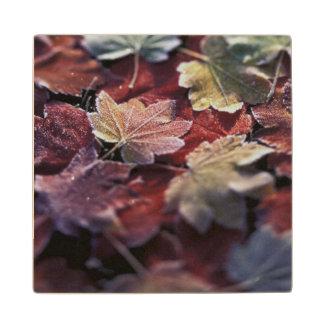USA, Pacific Northwest. Japanese maple leaves Wood Coaster
