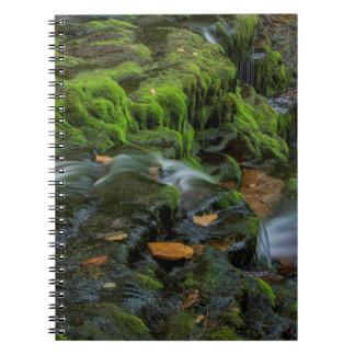 USA, Pennsylvania, Benton, Ricketts Glen State Notebook