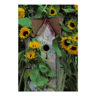 USA, Pennsylvania. Birdhouse and garden Poster