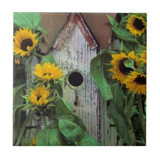 USA, Pennsylvania. Birdhouse and garden Tile
