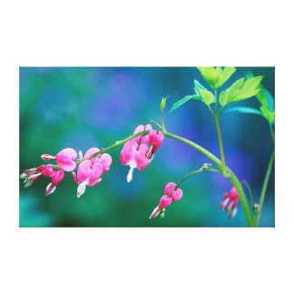 USA, Pennsylvania. Bleeding heart flowers Gallery Wrapped Canvas