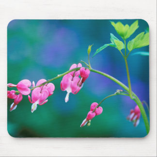 USA, Pennsylvania. Bleeding heart flowers Mouse Pad