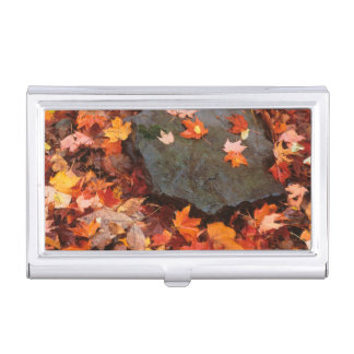 USA, Pennsylvania. Close-Up Of Forest Floor Business Card Holder