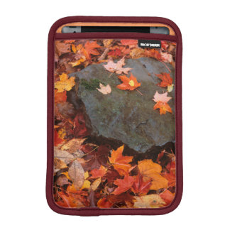 USA, Pennsylvania. Close-Up Of Forest Floor iPad Mini Sleeve