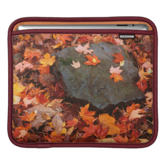 USA, Pennsylvania. Close-Up Of Forest Floor iPad Sleeve