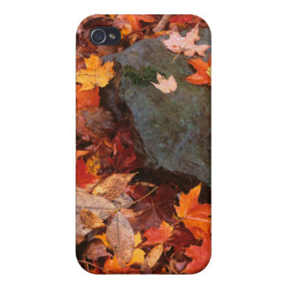 USA, Pennsylvania. Close-Up Of Forest Floor iPhone 4/4S Case