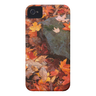 USA, Pennsylvania. Close-Up Of Forest Floor iPhone 4 Case-Mate Cases