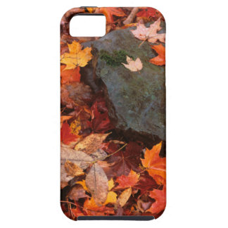 USA, Pennsylvania. Close-Up Of Forest Floor iPhone 5 Cover