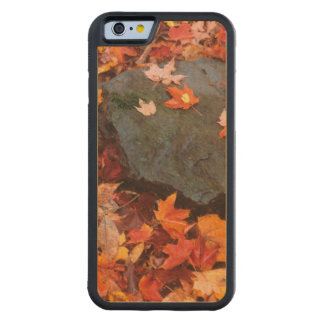 USA, Pennsylvania. Close-Up Of Forest Floor Carved® Maple iPhone 6 Bumper Case