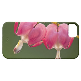 USA, Pennsylvania. Close-up of two bleeding Barely There iPhone 5 Case