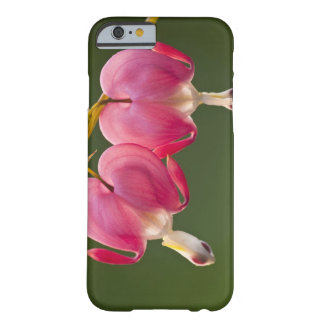 USA, Pennsylvania. Close-up of two bleeding Barely There iPhone 6 Case