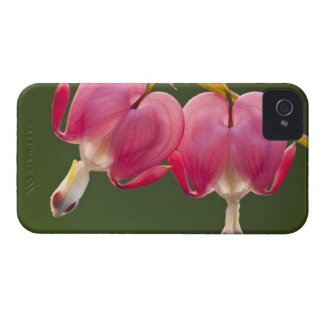 USA, Pennsylvania. Close-up of two bleeding iPhone 4 Case-Mate Cases
