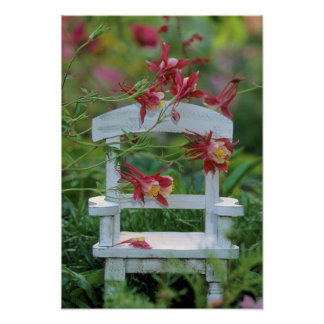 USA, Pennsylvania. Columbine flowers and chair Poster