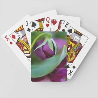 USA, Pennsylvania. Flower bud opening in spring Playing Cards