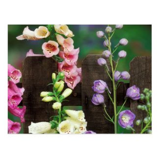 USA, Pennsylvania. Foxglove and delphinium Postcard