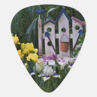 USA, Pennsylvania. Garden irises grow around Guitar Pick