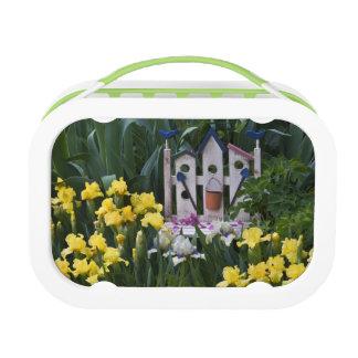 USA, Pennsylvania. Garden irises grow around Lunch Box