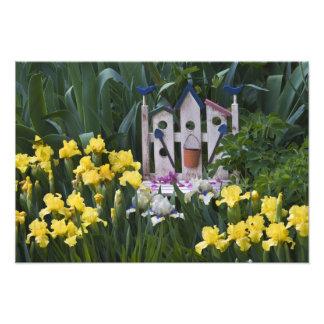 USA, Pennsylvania. Garden irises grow around Photo Print