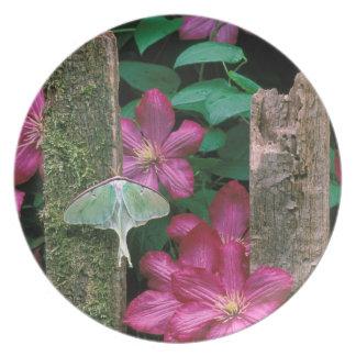 USA, Pennsylvania. Luna moth on fence Plate