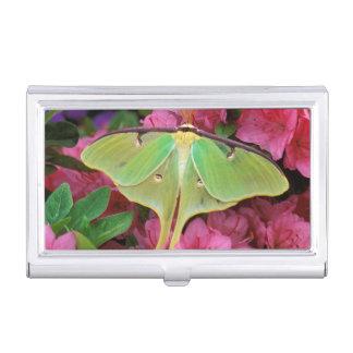 USA, Pennsylvania. Luna moth on pink clematis Business Card Holder