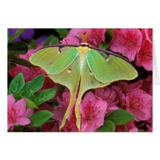 USA, Pennsylvania. Luna moth on pink clematis Card