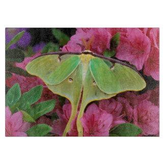USA, Pennsylvania. Luna moth on pink clematis Cutting Board