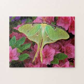 USA, Pennsylvania. Luna moth on pink clematis Jigsaw Puzzle