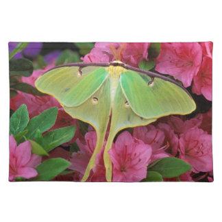 USA, Pennsylvania. Luna moth on pink clematis Place Mat