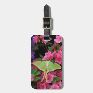 USA, Pennsylvania. Luna moth on pink clematis Tag For Bags