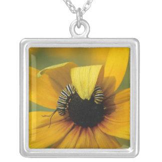USA, Pennsylvania. Monarch caterpillar on daisy Silver Plated Necklace