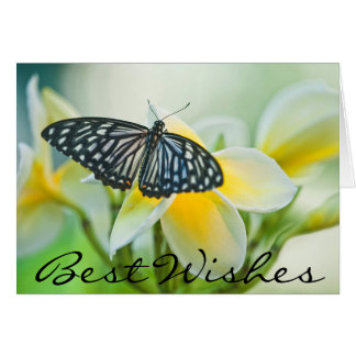 USA, Pennsylvania. Swallowtail butterfly Card