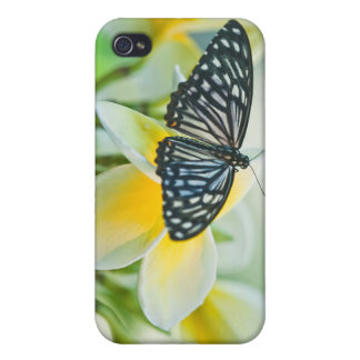USA, Pennsylvania. Swallowtail butterfly iPhone 4 Cases