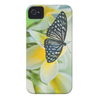 USA, Pennsylvania. Swallowtail butterfly iPhone 4 Cover