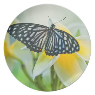 USA, Pennsylvania. Swallowtail butterfly Party Plate
