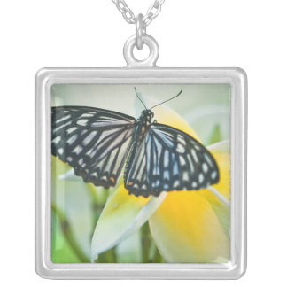 USA, Pennsylvania. Swallowtail butterfly Silver Plated Necklace