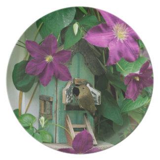 USA, Pennsylvania. Wren in birdhouse Plate