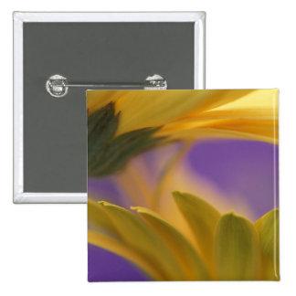 USA, Pennsylvania. Yellow Gerbera Daisies, close 15 Cm Square Badge