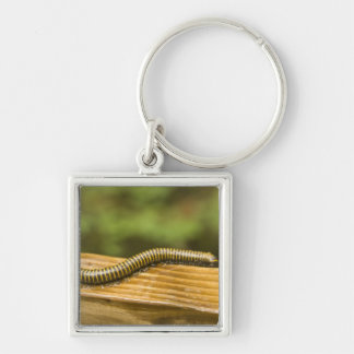 USA, Puerto Rico, Ponce. Millipede. Silver-Colored Square Key Ring