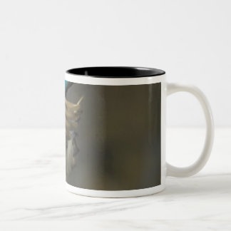 USA, Seattle, Washington. Male Mallard blasts Two-Tone Coffee Mug