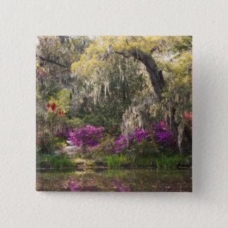 USA, South Carolina, Charleston. Cypress Trees 2 15 Cm Square Badge