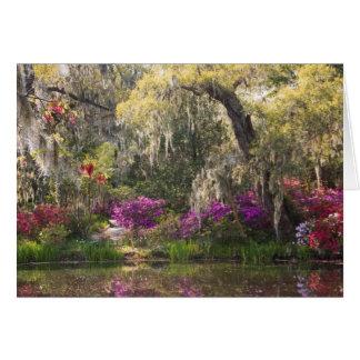 USA, South Carolina, Charleston. Cypress Trees 2 Card