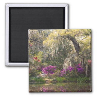 USA, South Carolina, Charleston. Cypress Trees 2 Magnet