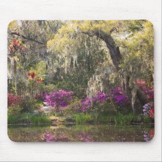 USA, South Carolina, Charleston. Cypress Trees 2 Mouse Pad