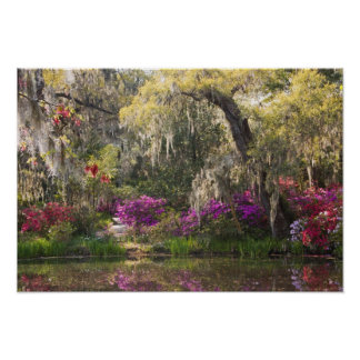 USA, South Carolina, Charleston. Cypress Trees 2 Poster