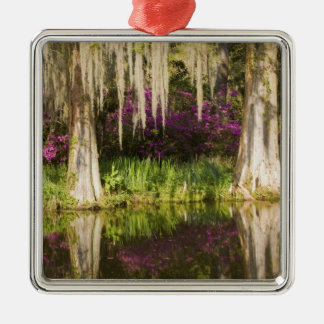 USA, South Carolina, Charleston. Cypress Trees Christmas Ornament