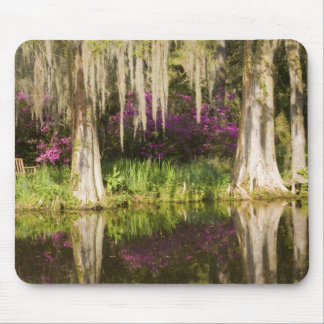 USA, South Carolina, Charleston. Cypress Trees Mouse Mat