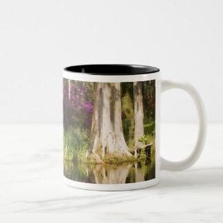 USA, South Carolina, Charleston. Cypress Trees Two-Tone Coffee Mug